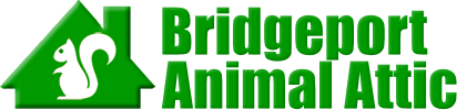 Bridgeport Animal Attic